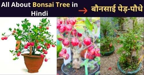 bonsai-tree-in-hindi